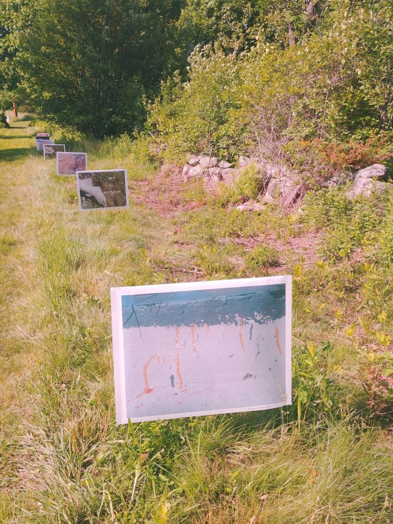 A series of 7 lawn signs  meander along the side of a trail in the Beals Preserve.